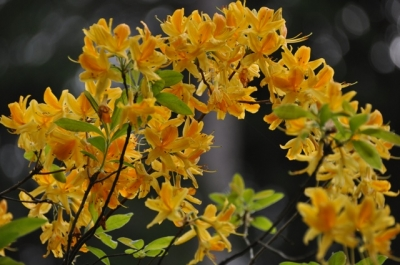die Wunderblume von Lendorf_10