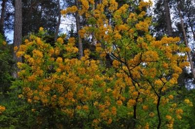 die Wunderblume von Lendorf_11