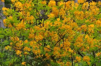 die Wunderblume von Lendorf_12