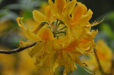 Die Wunderblume von Lendorf