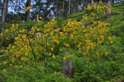die Wunderblume von Lendorf_16