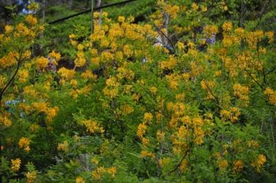 die Wunderblume von Lendorf_17