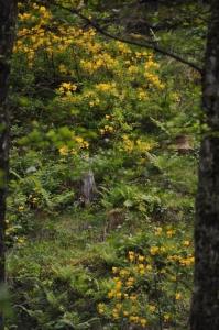 die Wunderblume von Lendorf_1