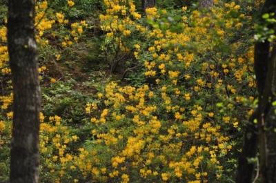 die Wunderblume von Lendorf_3