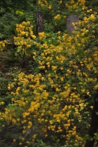 die Wunderblume von Lendorf_4