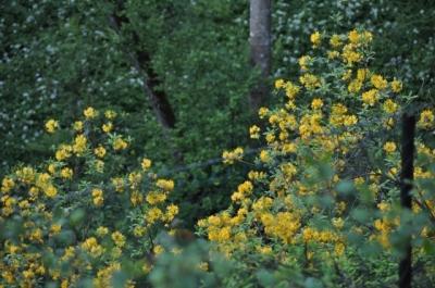 die Wunderblume von Lendorf_6
