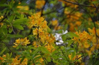 die Wunderblume von Lendorf_8