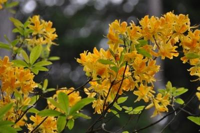 die Wunderblume von Lendorf_9